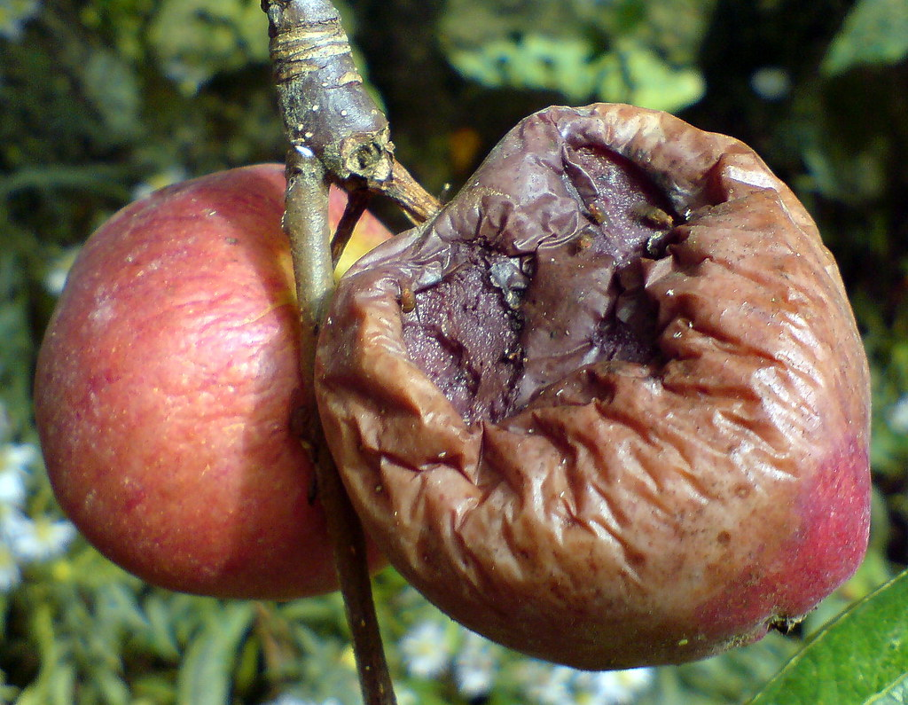 Which Plant Food Could Produce The Natural Toxicant Solanine
