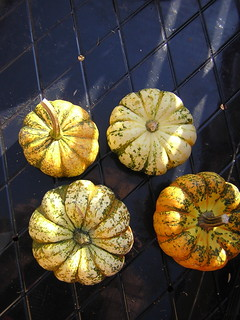 Pumpkins | by RichardBowen