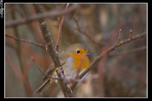 Ard Robin | by Alan Weir