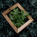 Framed Leaves silver Tiped