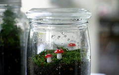 this morning i made terrariums. | by abchao