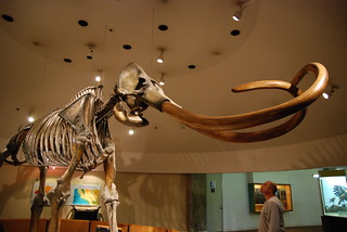 Columbian Mammoth | by sethoscope