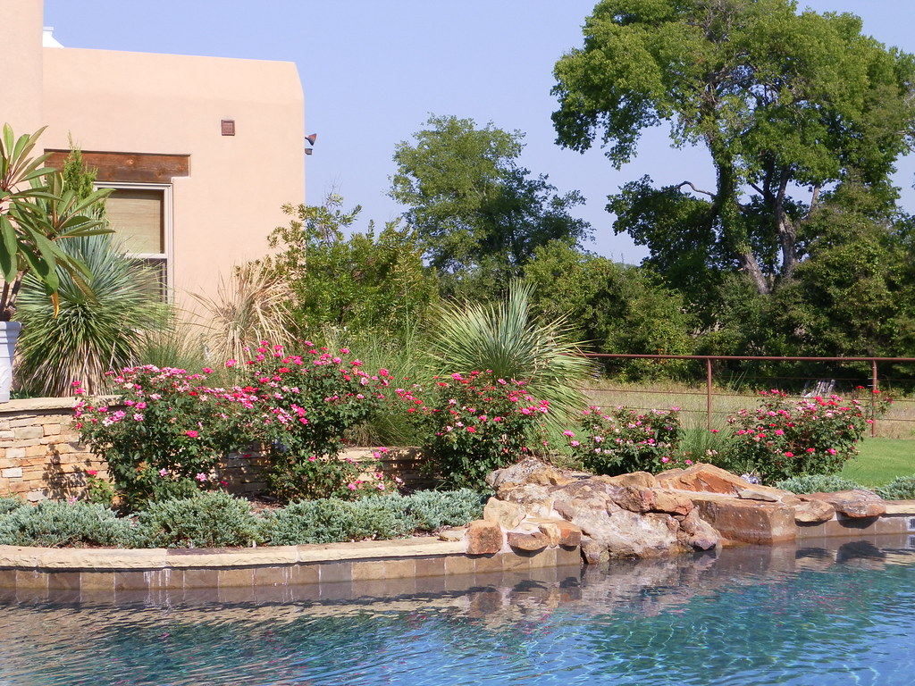 Xeriscape around a pool westlake this is a poolside for Gardens around swimming pools