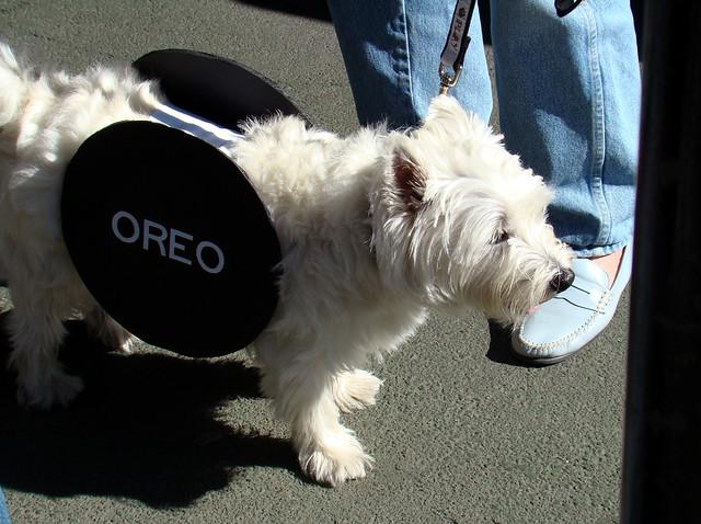 Dog Food Oreo