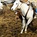 gathering mares 215
