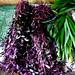 imbi market herbs