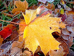 Leaves of the Autumn... | by Grace Olsson Fotograf(I´m abroad)