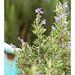 La Chiusa Rosemary