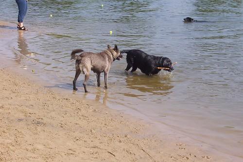 Bow Wow Dog Park Pennsauken