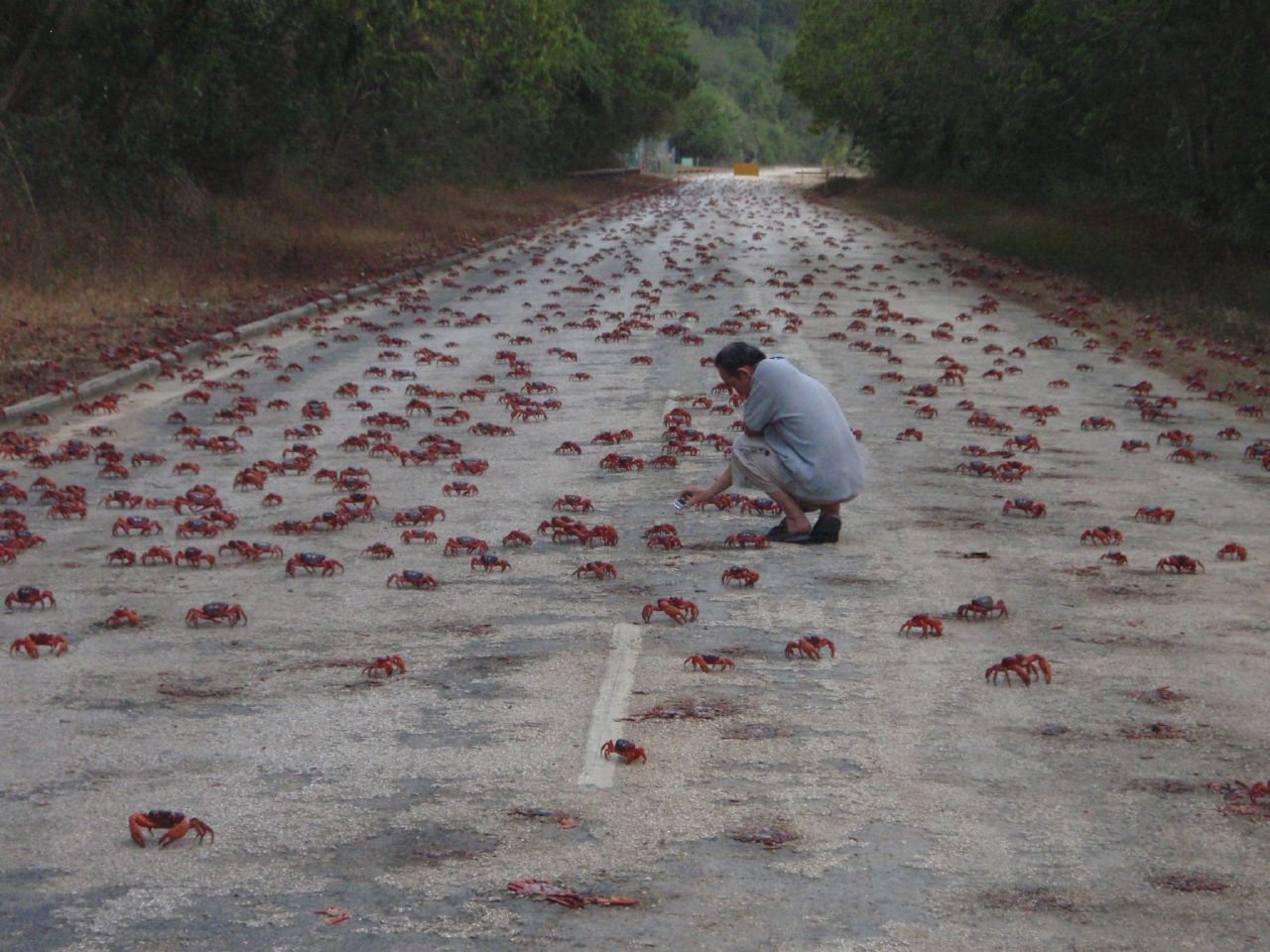 Red Crab Crossing