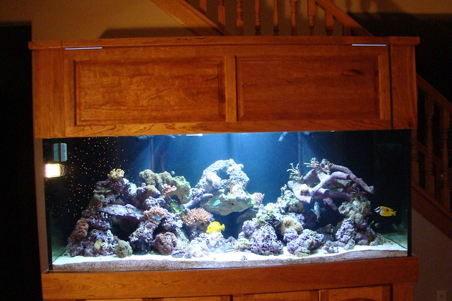 Fish tank games 80 gallon 29 gallon fish tank w stand for Fish tank game