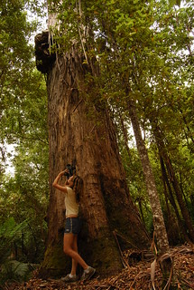 protect the forests, make faircompanies videos | by nicolas.boullosa