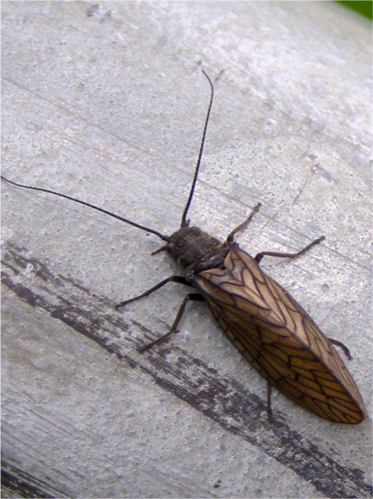 Insecte volant fran ois et fier de l 39 tre flickr - Photo d insecte de maison ...