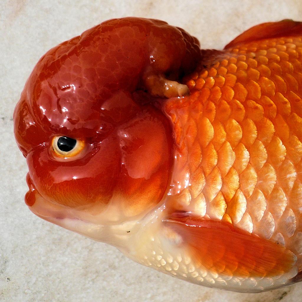fish brain - photo #6