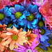Colorful Crazy Daisies (3)