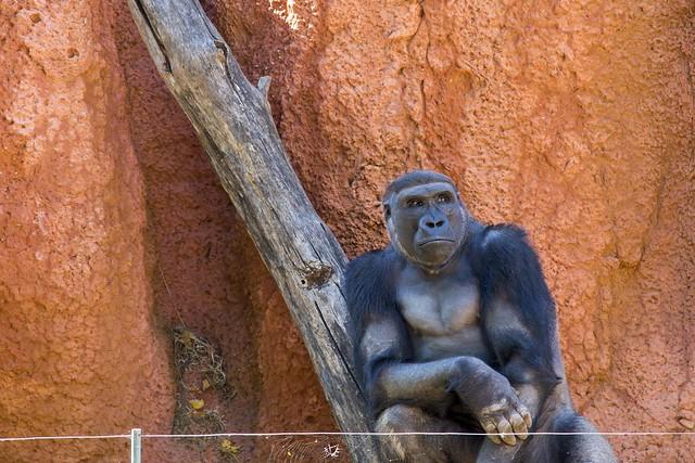 OKC Zoo_069