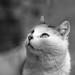 Lovecats
