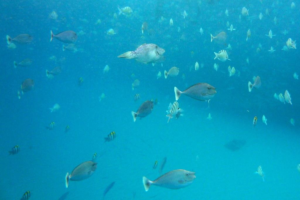 Tropical Fish Electric Beach Kahe Pt Oahu Hawaii Flickr