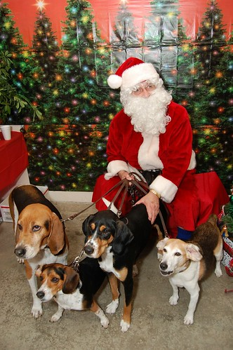 A hound dog Christmas. | by This Year's Love