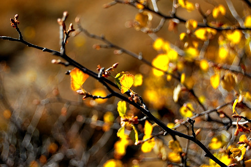 Leaves Turning | by ☞Today's✿Addiction☜