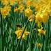 ...Spring!...