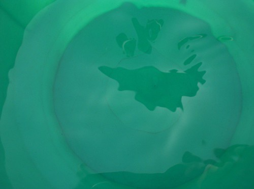 The world in a tumbler of water!! | by Snap®
