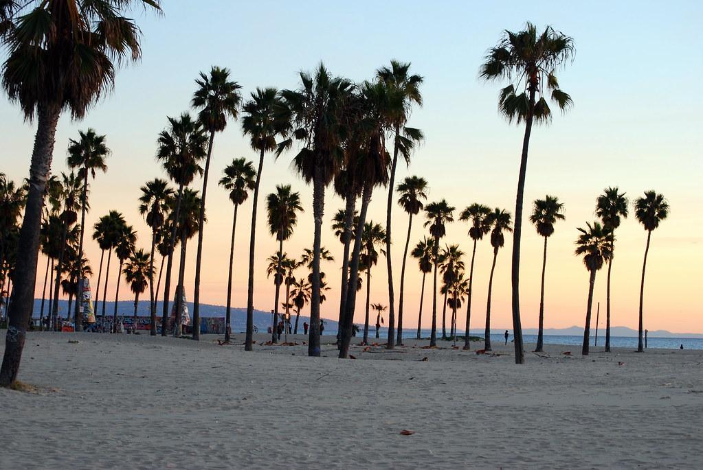 Palm Trees At Venice Beach California