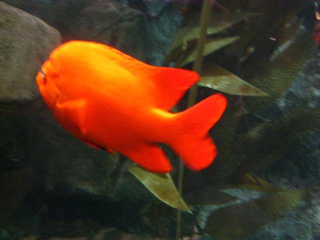 Fish at georgia aquarium explore jennandjon 39 s photos on for Georgia freshwater fish