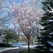 Snow, April 2008