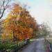 Autumn trees, Loch Lubnaig
