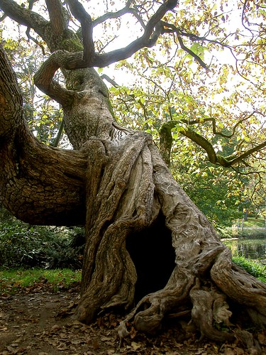 old-tree | by Roman-Achim.G.