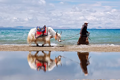 Yak Namtso Reflection | by Michael Bollino