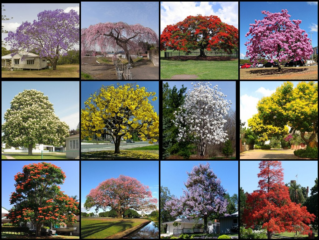 Most beautiful flowering trees of the world | Not my ...