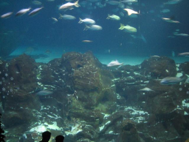Adventure Aquarium Camden Flickr Photo Sharing