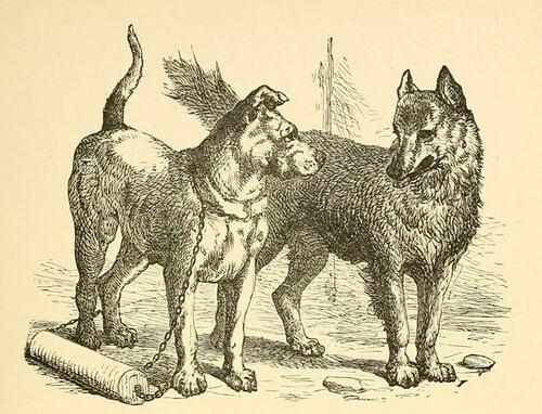 Fable  Dog Training