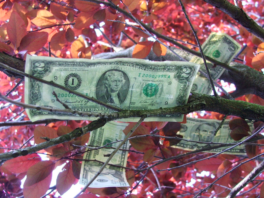 decorative: money among leaves