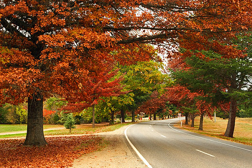 Bright Australia  city images : Bright, Victoria, Australia, Delany Avenue, autumn IMG 9824 Bright ...