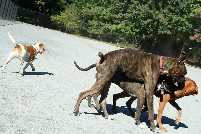 Wheaton Dog Park