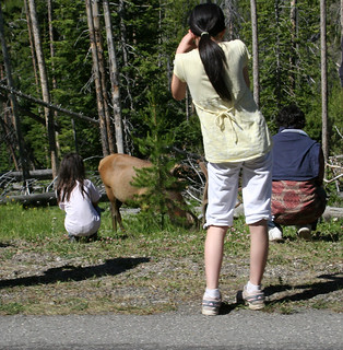 Get back Damn Fools!!!  Did You Know? There are more people hurt by bison than by bears each year in Yellowstone. Park regulations state that visitors must stay at least 25 yards away from bison or elk and 100 yards away from bears. | by Librarianguish