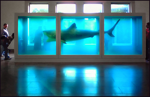 Dead Shark Backlit In A Tank In An Art Museum Www
