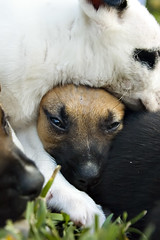 Puppy Pile Up Dog Beg
