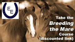 Breeding the Mare Course by Equus Education