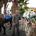 leading the donkey train