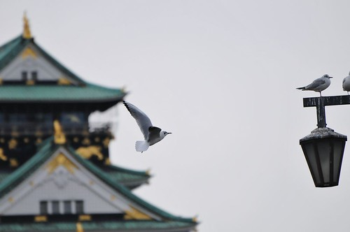 Osaka Castle and Black-head gulls | by naruo0720