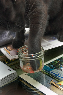 How To Be A Cat, Lesson 22: Eating Caviar | by Jim Skea