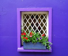 Lilac Window | by puri_