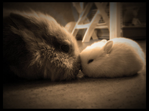 bunny love | by Antonio Galati