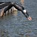 United States Olympic Triathlon Trials