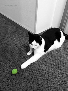 20170110 - Batman - with a Dirty Green Ball