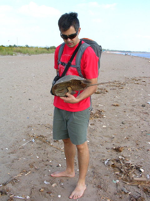 Crab Staten Island